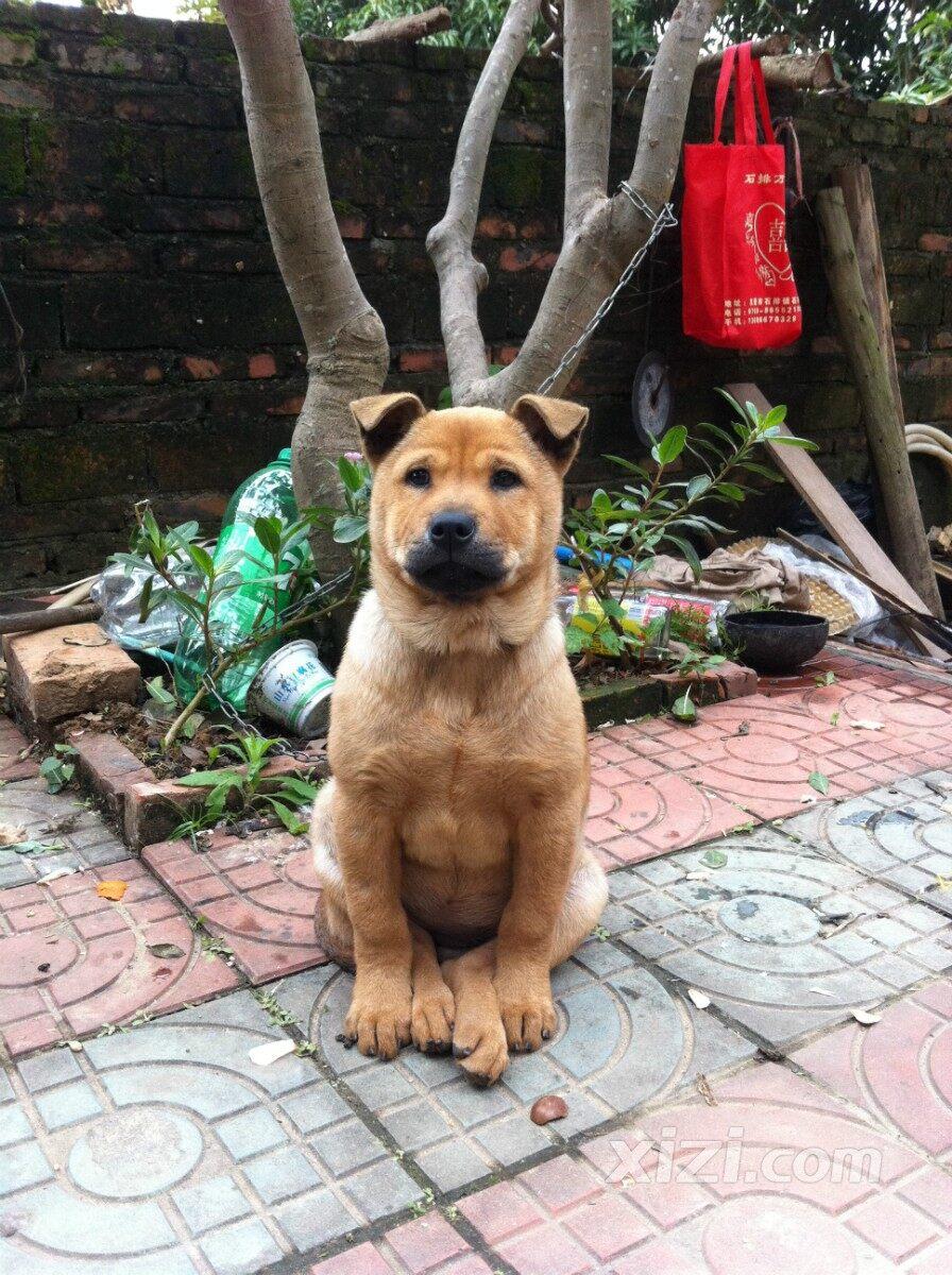 天猫02-02宠物秀场02-02惠州·西子论坛