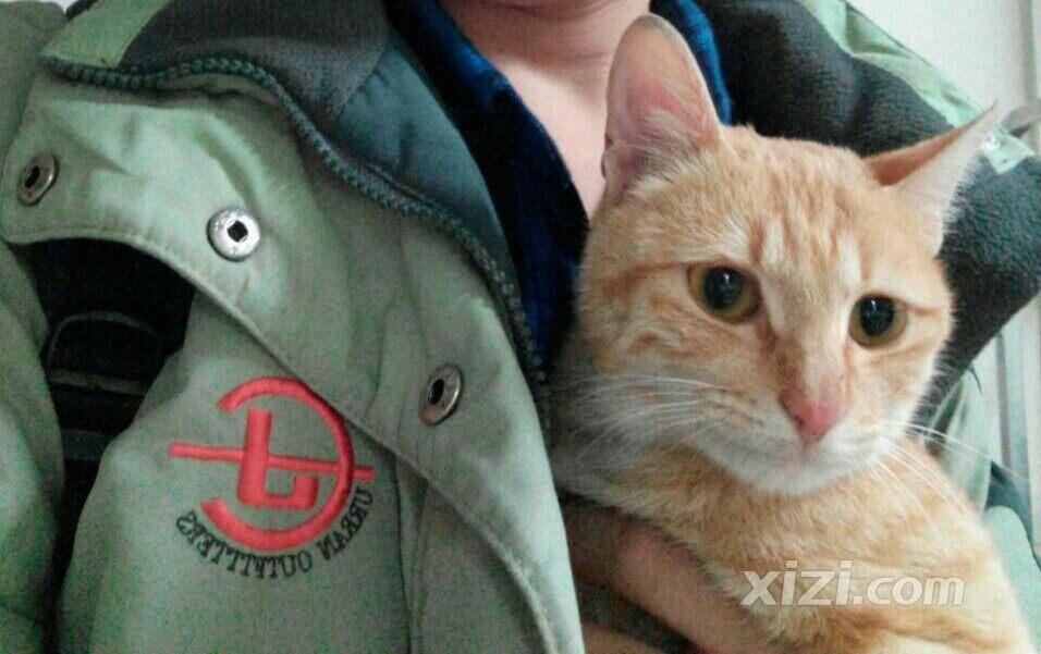 可爱猫猫求抱走02-02宠物秀场02-02惠州