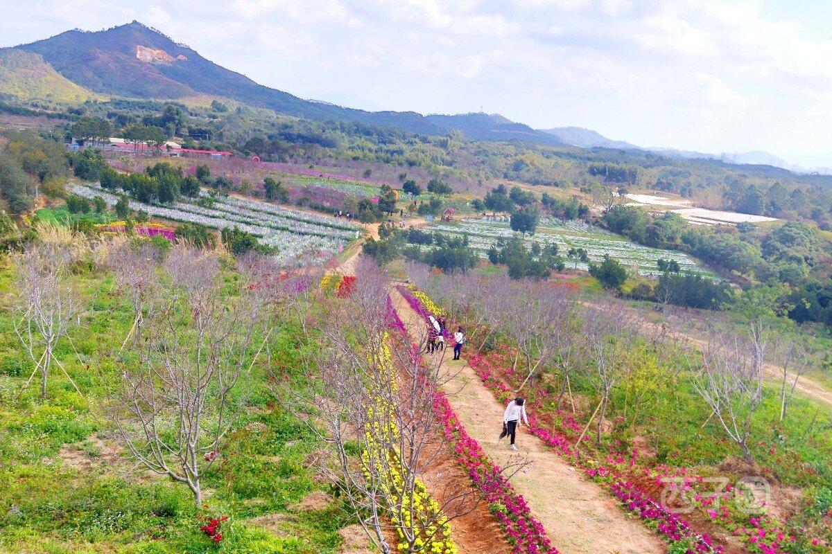 【2019猪事顺利】出去溜溜●看看惠东的生态园●樱花(