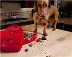 巧克力对猫狗来说究竟有多可怕?