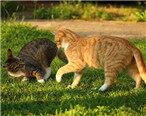你知道猫为什么会在便便后疯跑吗?