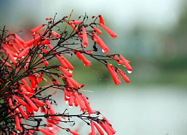 春雨后,仿佛惠州的一花一木一草都闪着金光