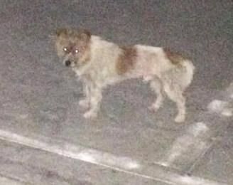 谁家丢失的小狗,在罗阳商业中街流浪一星期