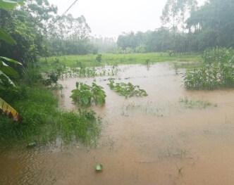 一下大雨,博罗杨村这里就成了一片鱼塘!