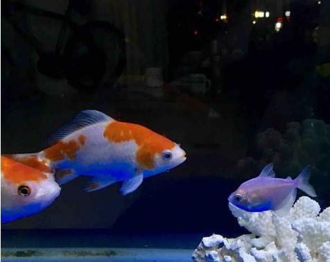 鱼趣 | 吃饱了看看自家的鱼也是一样享受!