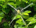 清晨的发现,这是什么蜘蛛?蛛网那么漂亮。