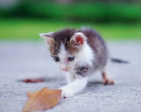 这西柚捡到一只流浪猫后,竟然选择这样记录