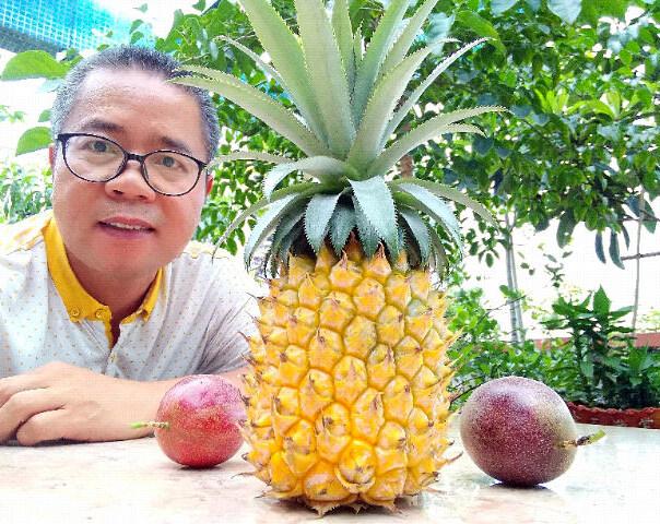 这大叔在家种的菠萝竟比在外面卖的还棒?