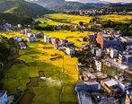 漫山遍野的金黄稻田!惠州周边有个惊艳小镇