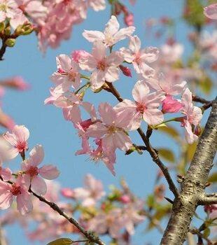 来拍花!这个樱花谷姹紫千红,百花争艳!
