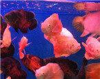 缤纷多彩的水族箱,鱼的世界真的好浪漫啊