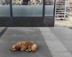 谁家的狗狗,已经在华贸这里等了很多天了