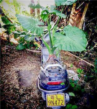 你家的花盆呢?为什么要用摩托车来种盆栽啊