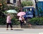 明明有斑马线,惠东这妇女过马路却要走绿化带