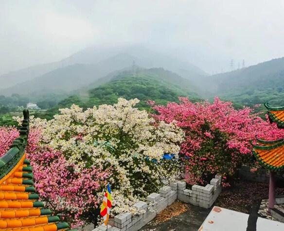 惠州周边赏秋一日游!这个地方百花绽放啦
