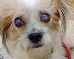 谁这么残忍?惠东一只小狗被戳瞎眼睛
