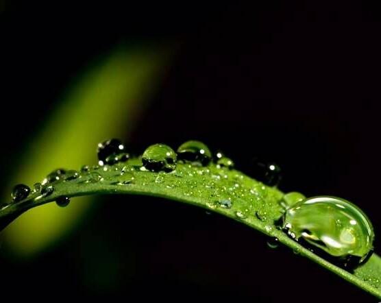 闲着在家用微距相机拍花、拍水滴也很不错