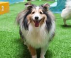 今天在港惠,竟然被上百只狗包围了...