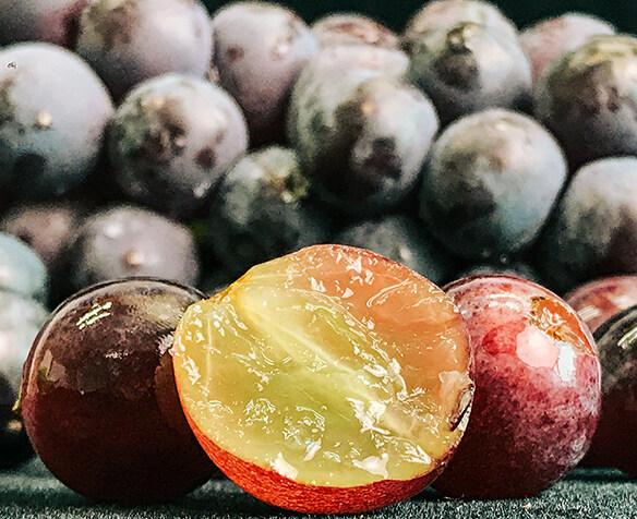 80斤葡萄免费送!占地20亩的葡萄园已经熟
