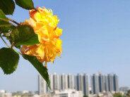 在家也能赏花,春天已经来了