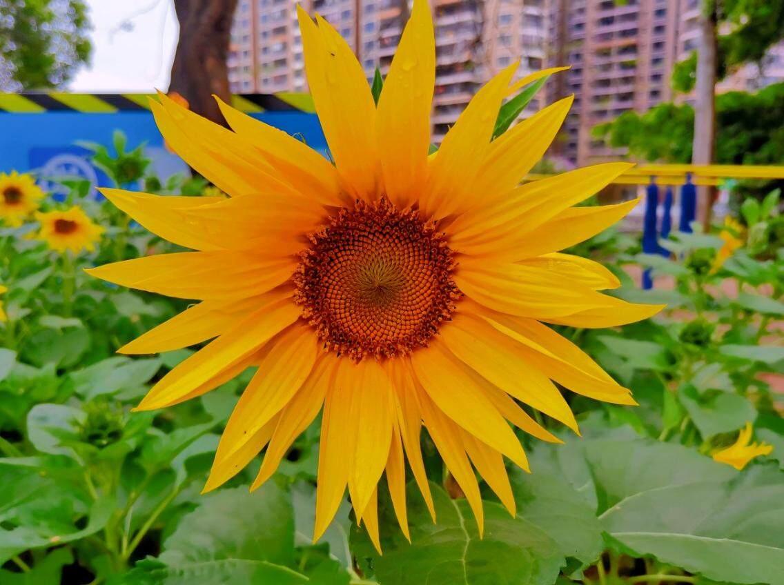 春天到了南湖公园开了好多花,鲜艳又漂亮