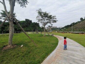 金恺大道旁边这片绿地适合郊游和野餐